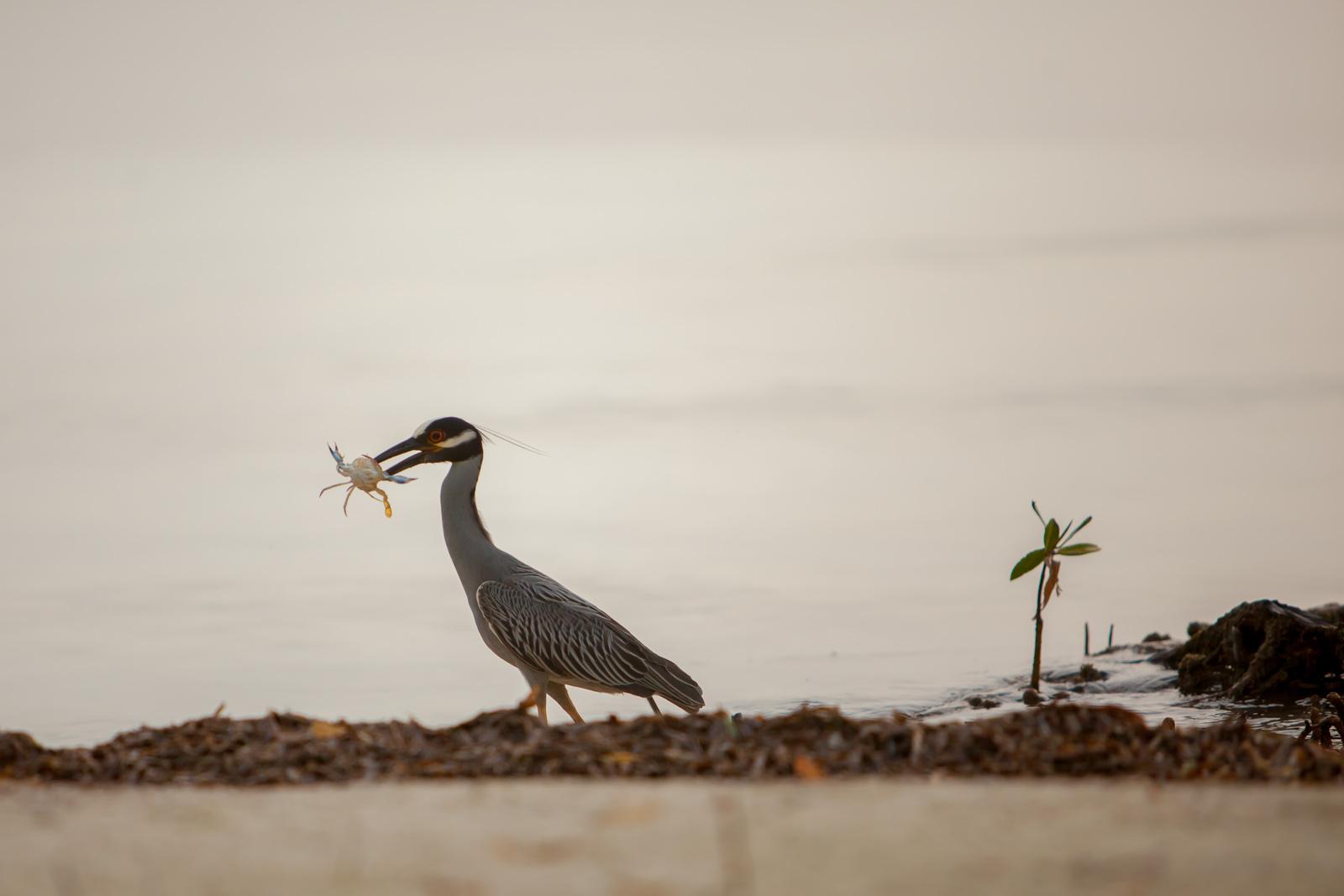 bird watching in belize