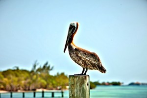 Bird watching in Belize