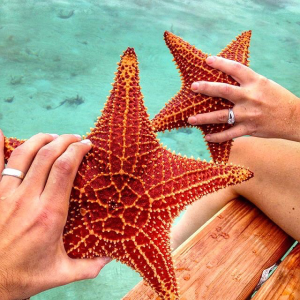 starfish-in-belize