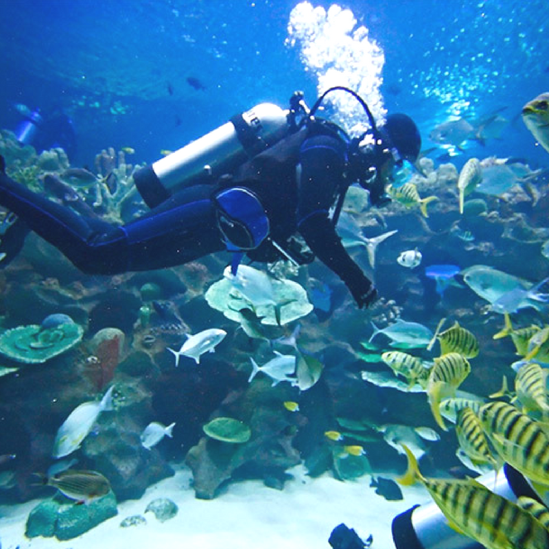 Belize-All-Inclusive-Diving-Package