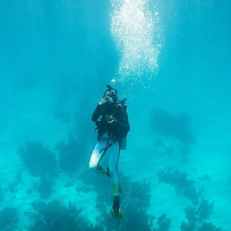 How about a adding Belize diving tours to your winter vacation?