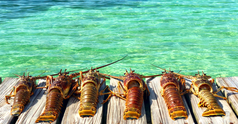 Belize Lobster Fest 2019