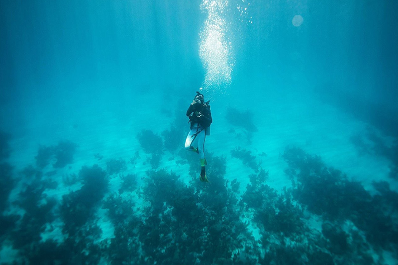 Belize all inclusive scuba diving trips